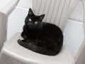 polstain-farm-cattery-cornwall-09