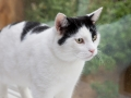polstain-farm-cattery-cornwall-10