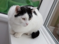 polstain-farm-cattery-cornwall-11