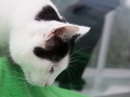 polstain-farm-cattery-cornwall-12