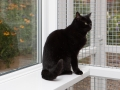 polstain-farm-cattery-cornwall-14